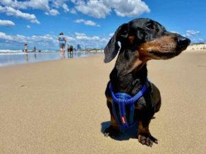 Dog-Friendly Beaches in Queensland